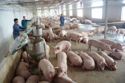 Hệ Thống Làm mát thông gió nhà xưởng cho trang trại chăn nuôi