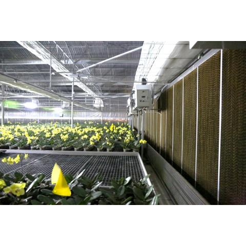 Hệ thống thông gió làm mát cho trang trại trồng hoa